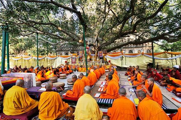 Các Phật tử cùng nhau học kinh phật